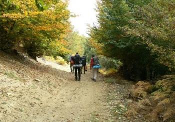 پیاده روی جنگل خلخال به اسالم (قسمت پنجم) | درخت هر چی پربارتر، افتاده تر